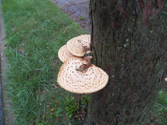 fungi photo